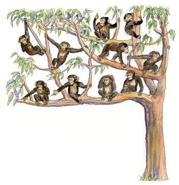 Ten Monkeys